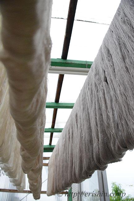 本歯結城紬の糸を染め上がりに後干しているところ