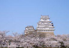 満開の姫路城の桜